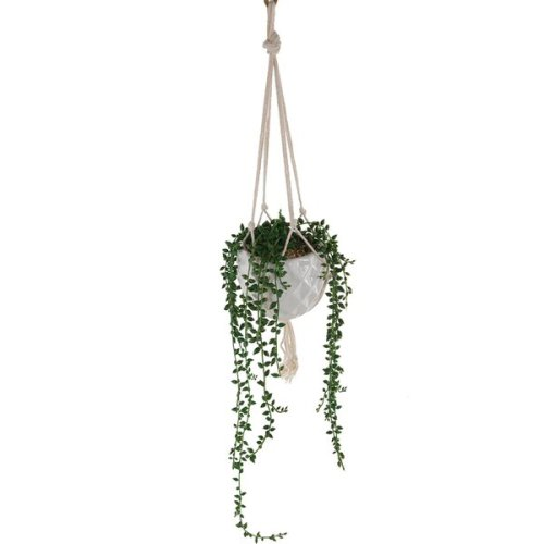 Donkey+Tails+String+of+Pearls+Hanging+Ivy+Plant+in+Pot.jpg